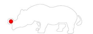 Rinoceronte nariz vermelho para release